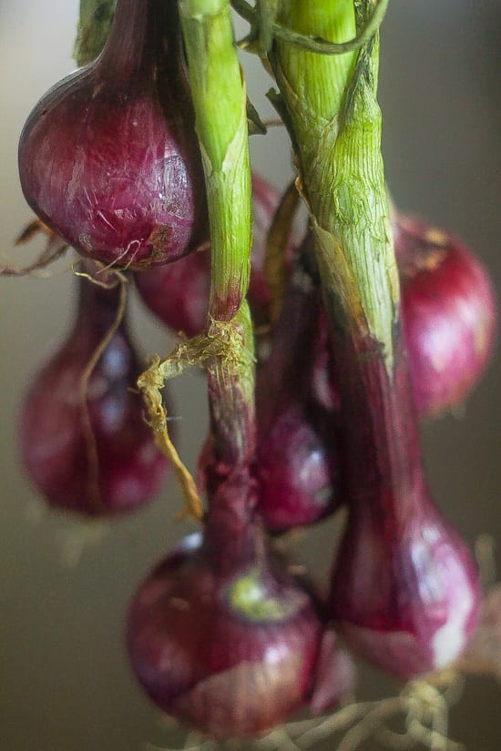 mini red onions with stems